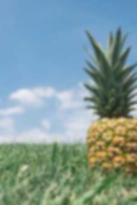 معرض بريانا بانكس الحلق العميق