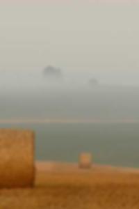 خشب الأبنوس BBW الدهون طبطب الأسود