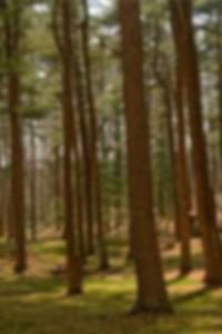صور عايدة yespica عارية