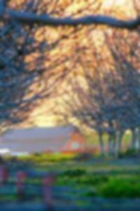 فريق الرمز العاري ibis